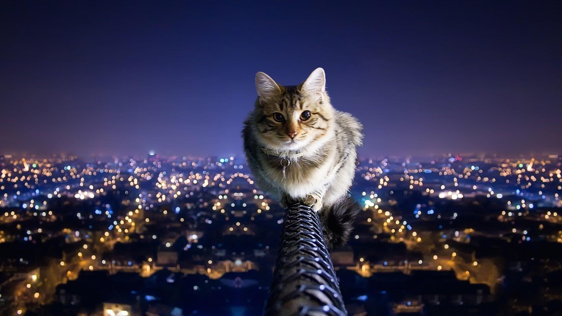Nine lives of a cat travfashjourno
